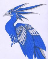 Mexican Blue Phoenix 3 by verreaux