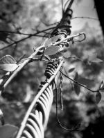Wires and Barbs... by iluvobiwan91