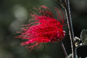 Splashes of Red on the Wind by chead77