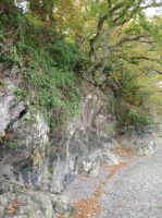 Trees and Rock Formations by chesya
