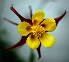 center yellow by awjay