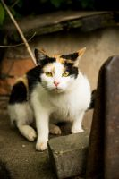 homeless cats 02 by rootkit0
