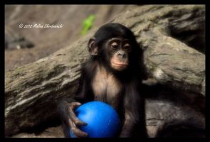 Baby Bonobo by aperfectmjk