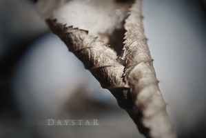 Winterstill by Daystar-Art