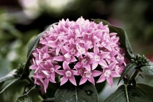 Pink Ball by JaSaAL