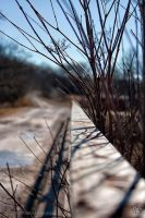 Twigs by TRE2Photo-n-Design