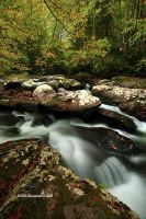 Early Signs of Autumn by TRBPhotographyLLC