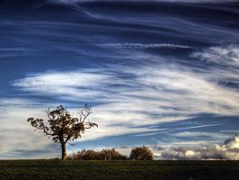 Tree III by StuMac1985