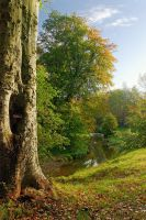 Minnowburn Beeches October by Gerard1972