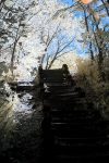 A Stairway in IR by dmurphy570