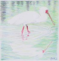 Spoonbill - sketch from a book by DeBeginning