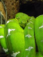 Slither Hither by NatureRaven