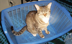 Cat In the Basket by erwebb