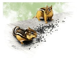 Dinnertime for Chipmunks by PENICKart