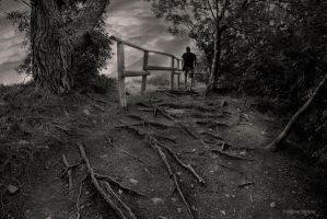 Roots by lpetrusa