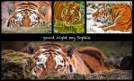 Good night Sophie by brijome
