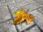 Lonely Leaf Left Alone by Amalphi