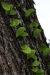 Growing on the Tree by syairazi86