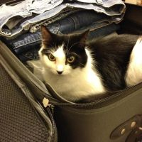 Yuki Wants To Travel, Too by DarlingChristie