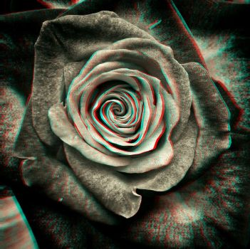 Rose 3-D conversion by MVRamsey