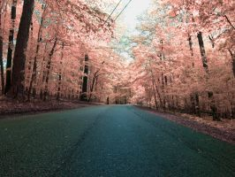 Pink Forest by JohnKyo