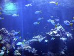 Coral-reef by Trisaw1
