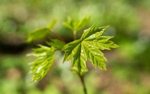 Spring 2015 19 New life by Henrikson