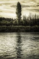 The lonesome tree by Enigma087