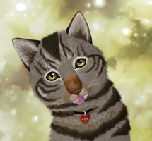 Tabs the Cat - Contest entery by Ithfifi