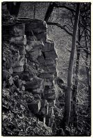 Trees and Stones 03 by HorstSchmier