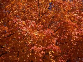 Russet by meljoy68
