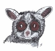 bushbaby by drugTito