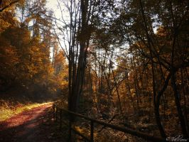 Golden October by Ibilicious