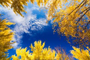 Skies Above Autumn by FramedByNature