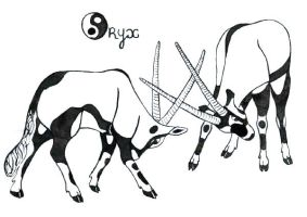 Oryx Beisa fighting by Faelyne
