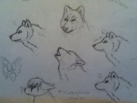 Realistic Wolf sketches by Soel-Insanity