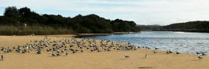 Gull panorama 2 by wildplaces