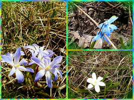 The first spring flowers. by Mladavid