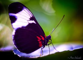 Wings. by Phototubby