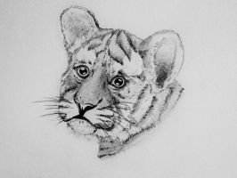 Little Tiger by User-404