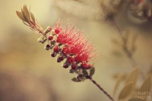 BottleBrush by lost-in-this-world