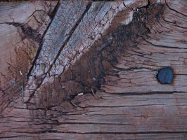 wood texture 2 by fotophi