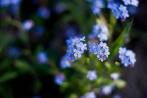 forget me not by victimofemotion