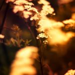 Indian Summer by Sortvind