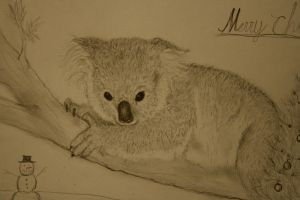 Koala by smokinsteve57