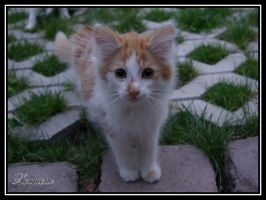 Kitten by Loupiotte1203
