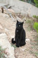black cat stock by AnsheraZ-Stock