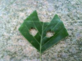 Cat face on a leaf by oohcoo