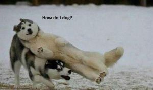 How do I dog? by The--Mad--Russian