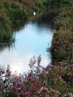 River Rother by dottylegs